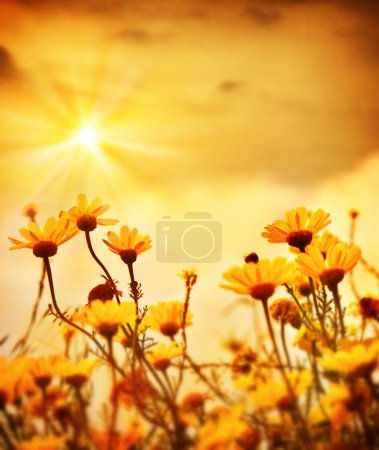 Flowers over warm sunset